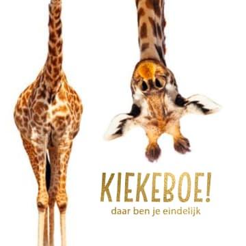 - geboorte-giraffe-kiekeboe