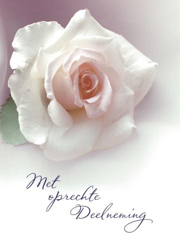 - deelneming-met-roos