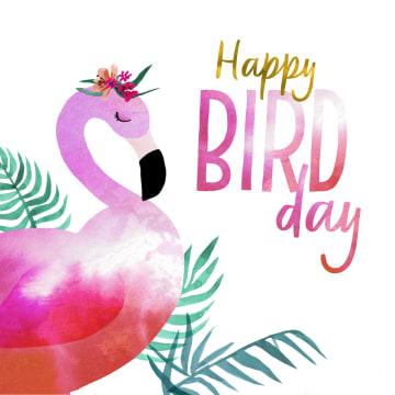 - happy-bird-day-van-een-pelikaan