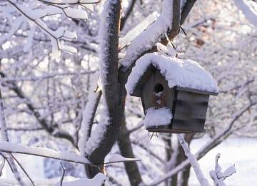 - besneeuwde-bomen-en-besneeuwd-vogelhuisje