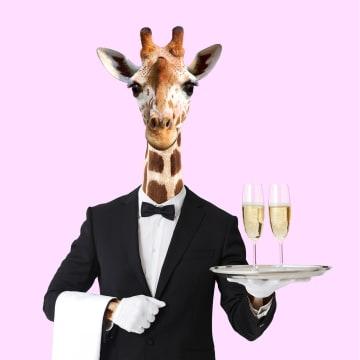 - nieuwjaarskaart-hip-giraffe-ober-champagne-paul-fuentes