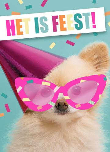 - het-is-feest-met-hond-met-bril-en-hoed