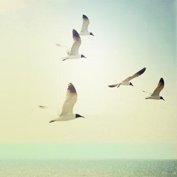 - vogels-aan-het-strand