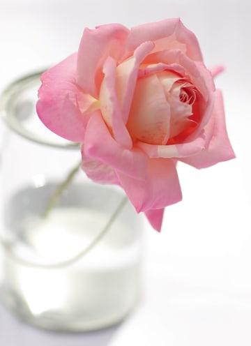 - een-enkele-roos-in-een-glazen-vaas