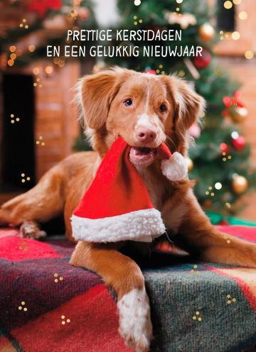- Kerstkaart-klassiek-Hond-met-kerstmuts