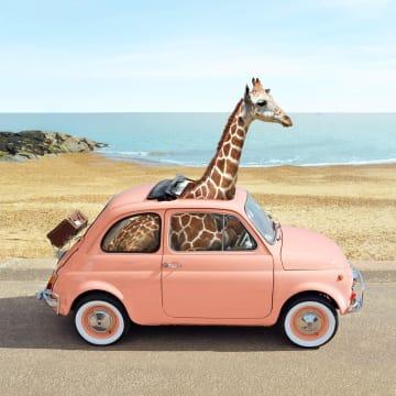 - giraf-in-kleine-auto