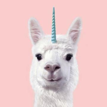 - unicorn-lama