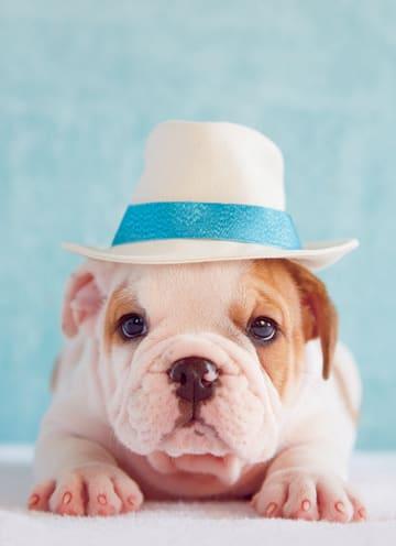 - hond-met-hoed-op