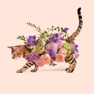- Verjaardagskaart-vrouw-grappig-poes-met-bloemen