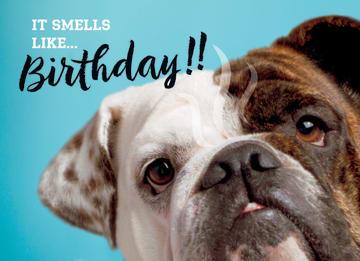 - animal-fiesta-it-smells-like-birthday
