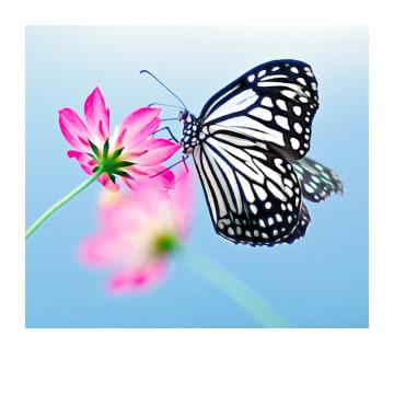 - Condoleancekaart-vlinder