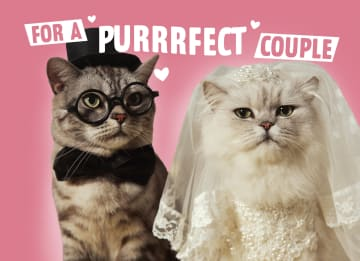 - for-a-purrrfect-couple