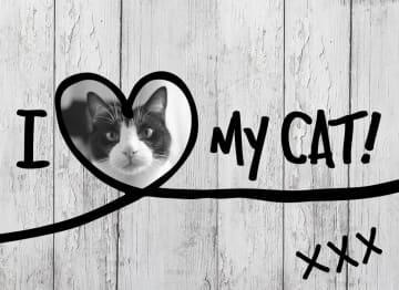 - i-love-my-cat