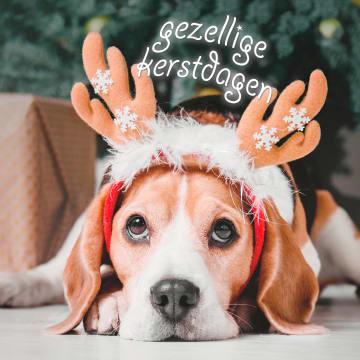 - Kerstkaart-klassiek-hond-met-gewei