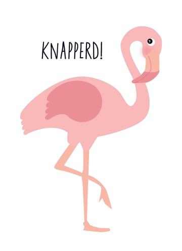 - flamingo-knapperd