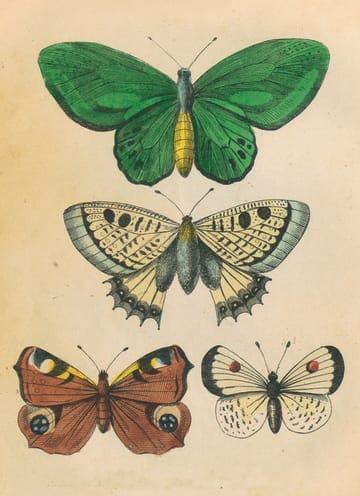- herfst-kaart-driemaal-vlinders