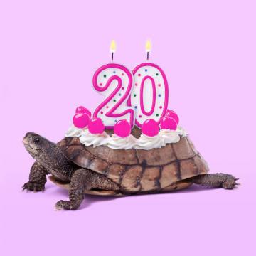 - schildpad-taart