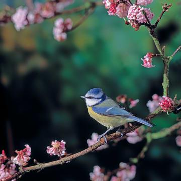 - ombouw-vogeltje-op-tak