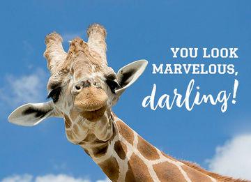 - animal-fiesta-you-look-marvelous-darling