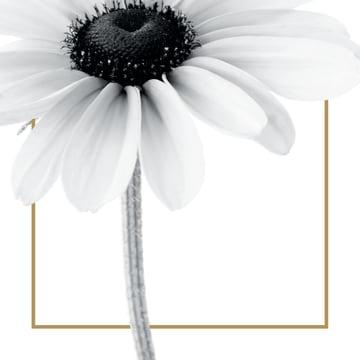 - enkele-witte-bloem-met-goud-randje