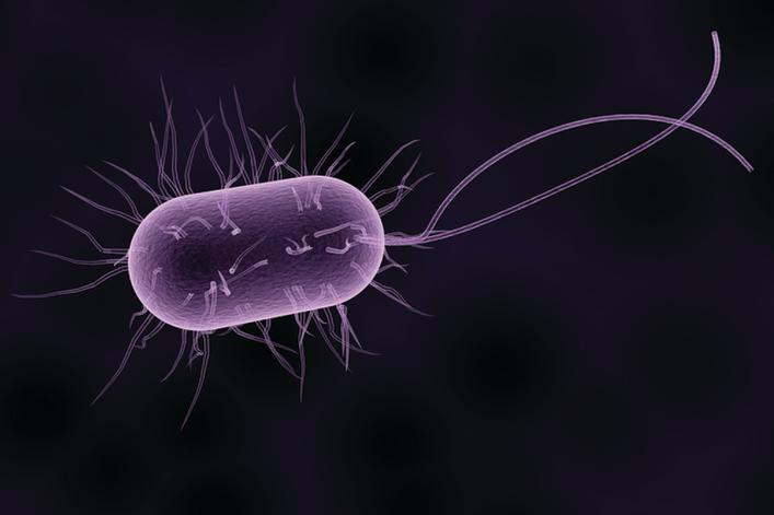 la-bacterie-e-coli-5f4c0ad92826c.jpeg