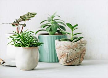 Home Decor - Plant Decor