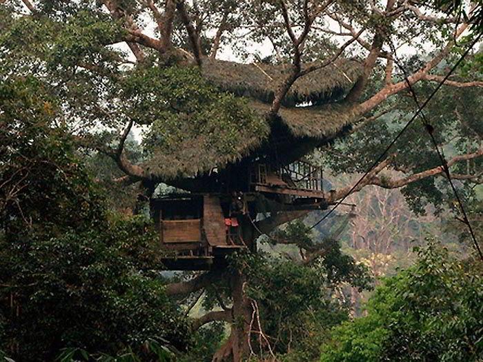 домик на дереве