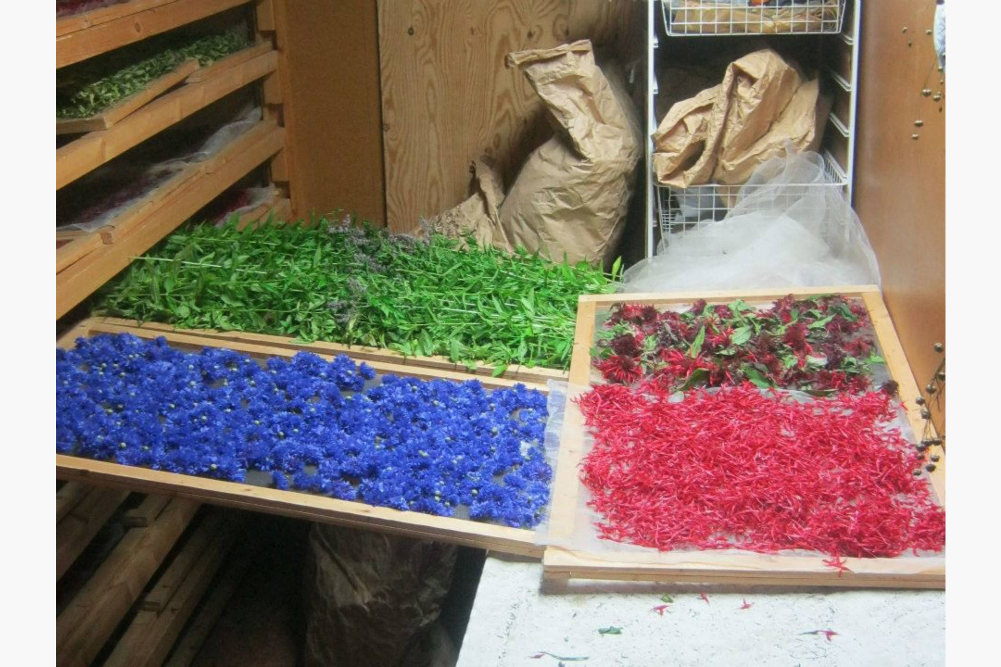 Blomster på urtetørka