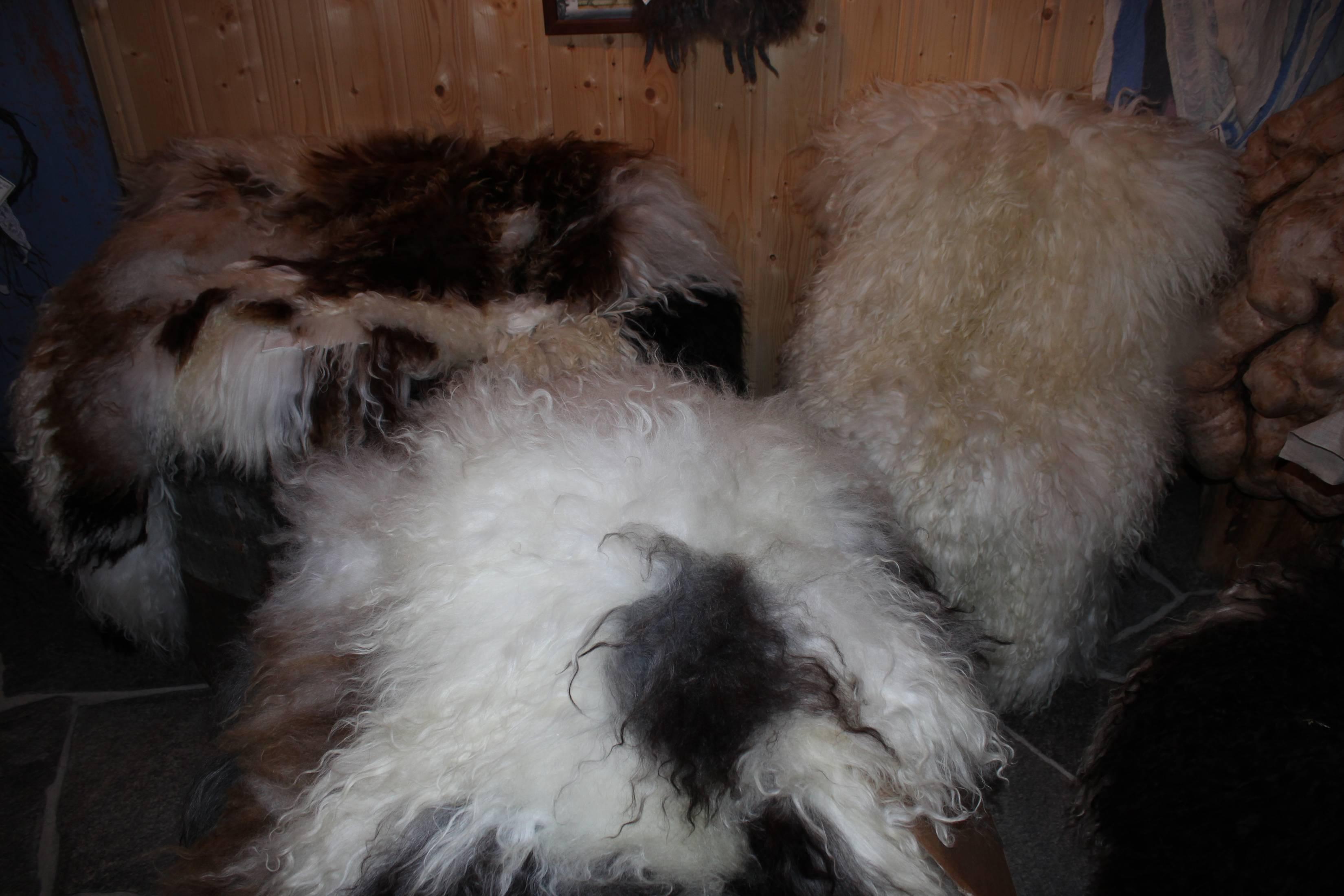 Sau skinn av Gammelnorsk spælsau-lam