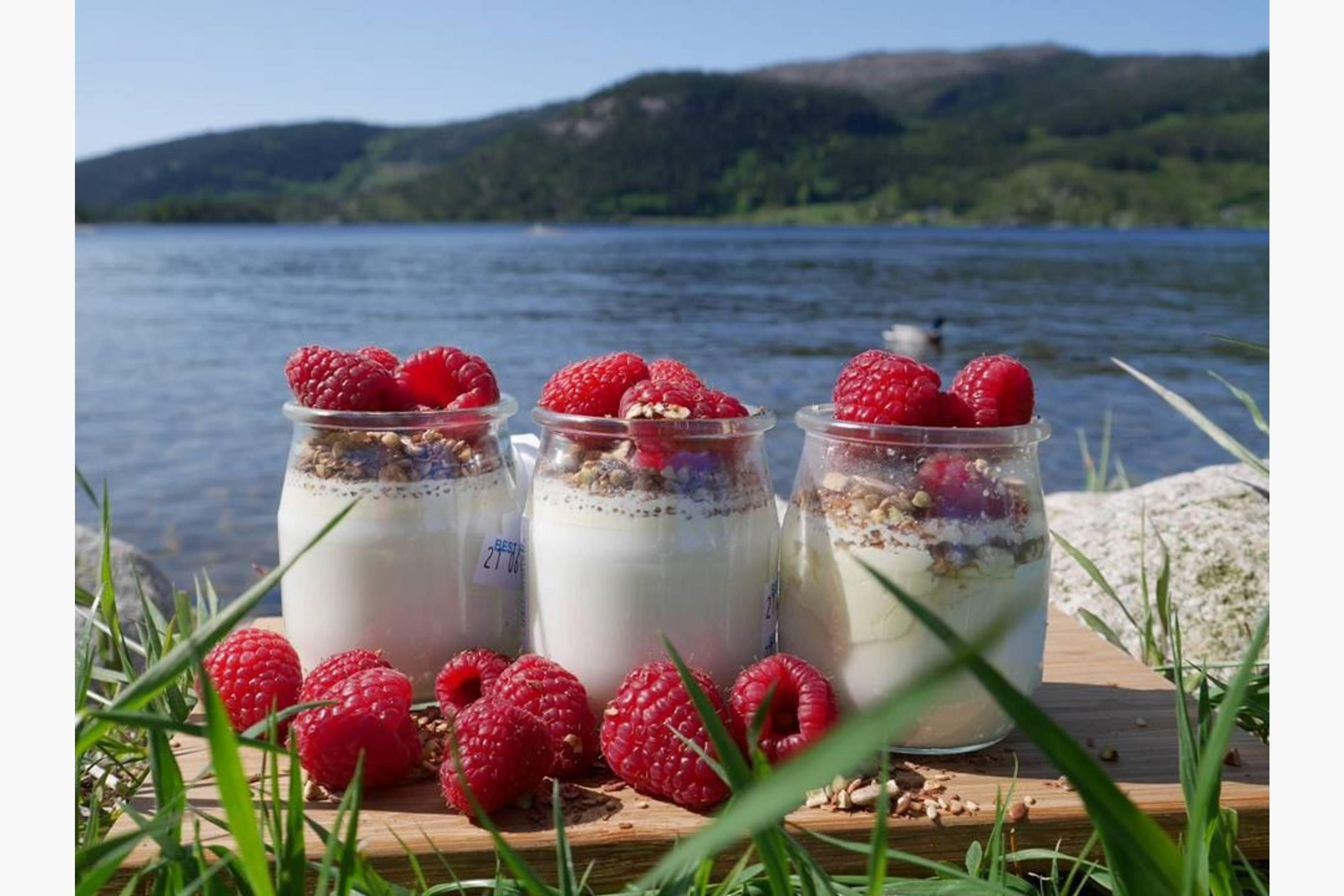 STJERNA-YOGHURT er naturell og urørt. Den ligner litt på den greske yoghurten, men med den unike smaken av Jersey- og Sidet Trønder og Nordlandsfe-melk. Matcompaniet omtaler Stjerna yoghurt slik: Folka på Tjamsland gård har kommet med enda et fersk og friskt melkeprodukt; økologisk yoghurt laget på dagfersk og ureist melk fra de seks kuene som nå melkes på Tjamsland i Birkenes. I god Tjamsland- tradisjon er Yoghurten oppkalt etter en av kuene som har beitet på jordene rundt gården. Den har en mild og fin syrlighet som balanseres perfekt med melkesødmen. Yoghurten nytes gjerne naturell, blandet med friske bær eller ditt favorittsyltetøy.