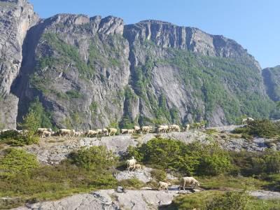 Bilde fra Fjellam frå Ryfylke