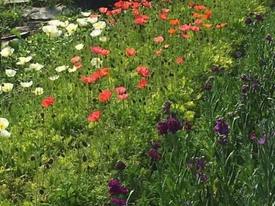 Bilde fra Polly og molly blomster