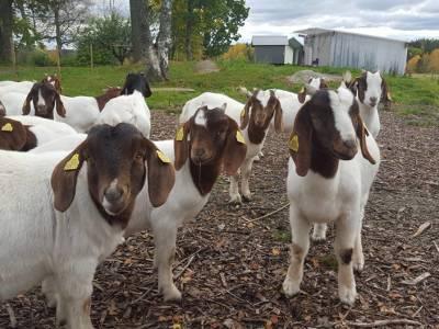 Bilde fra Sandem gård