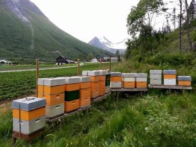 Bilde fra Bieprodukter