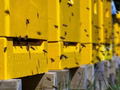 Bilde fra Flemsetra Honning Oppigarden