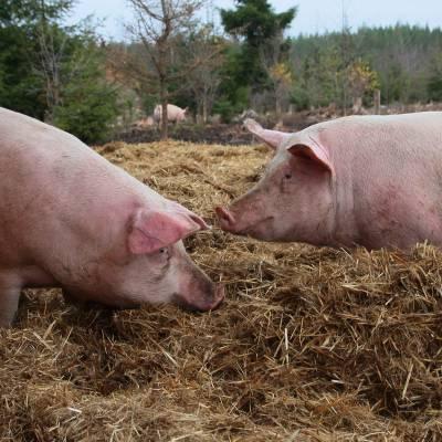 Bilde av Hotell Grisegod for folk og dyr