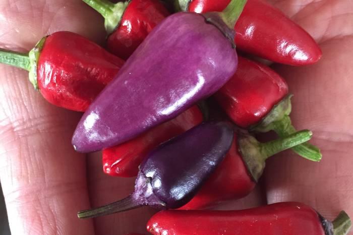 Chili for enhver smak!
