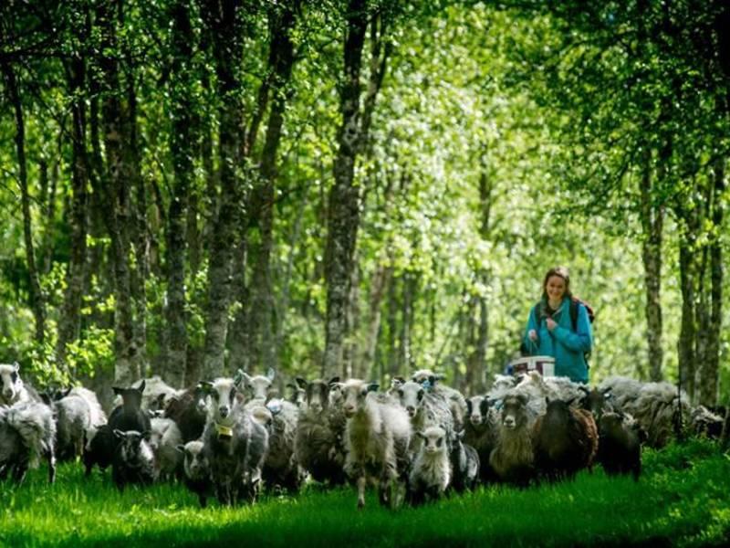 Bilde fra Selnes Gård