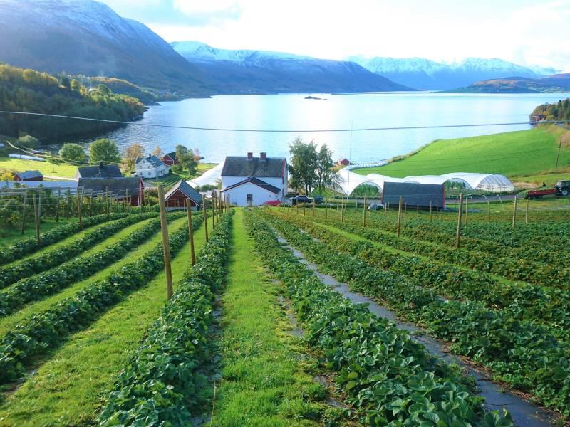 Bilde fra Vik gård