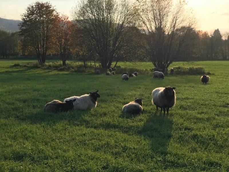 Bilde fra Brennmoen gård