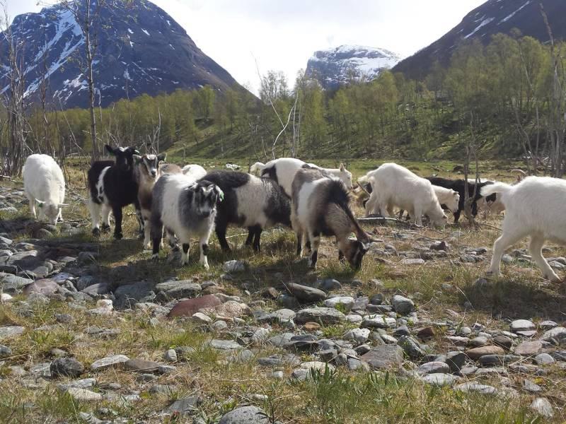 Bilde fra Arktisk kje