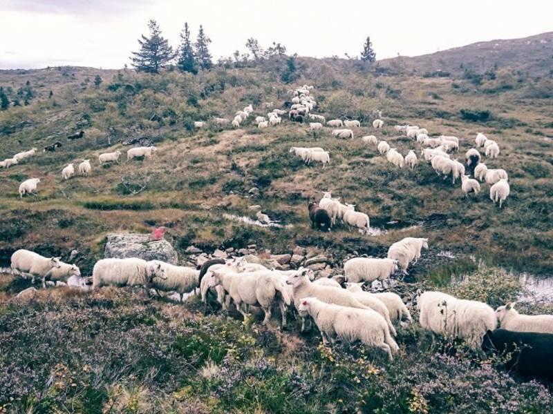 Bilde fra Telemarklam