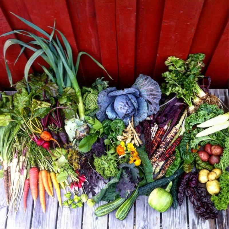 Bilde av Kan det endelig bli lokale grønnsaker i Bergen?