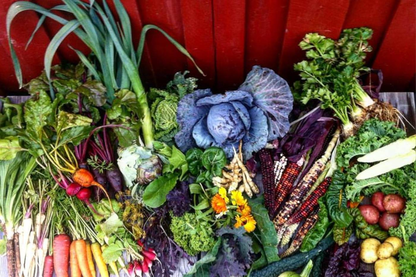 Kan det endelig bli lokale grønnsaker i Bergen?