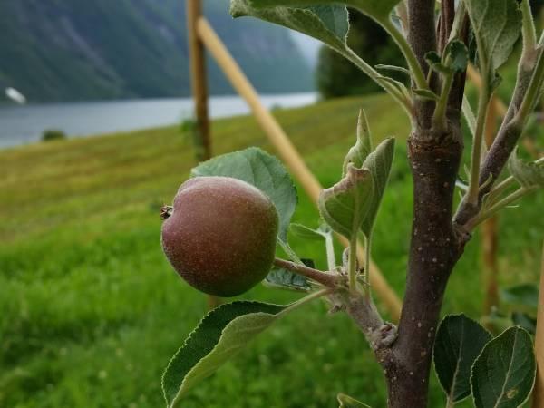 Hjørundfjord Fruktpresseri