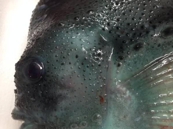 Fiskcentralen A/S