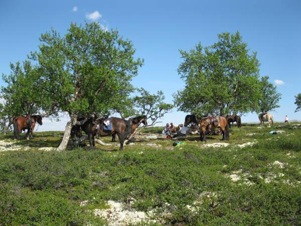 Øien Øvre Fjellridning og Hesteaktiviteter