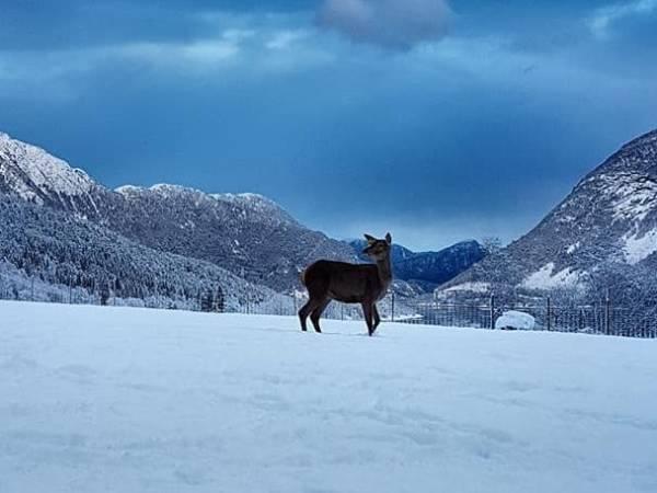 Hjortegarden