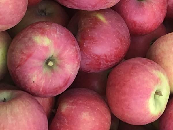 NeRø Frukt og Sider