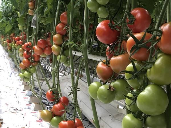Skarstad gartneri og gårdsmarked